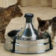 Cat Water Drinking Fountain Reviews