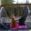 Find Outdoor Cat Enclosures